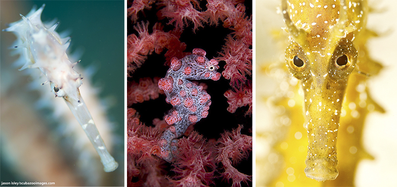 Natural Inspirations. Hippocampus