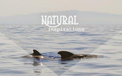 Inspiración natural. Calderón tropical
