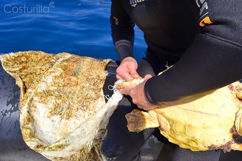 Rescate de tortuga enredada en plástico