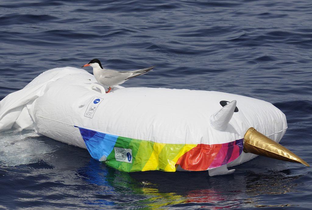 Charrán sobre salvavidas en el mar, océano limpio