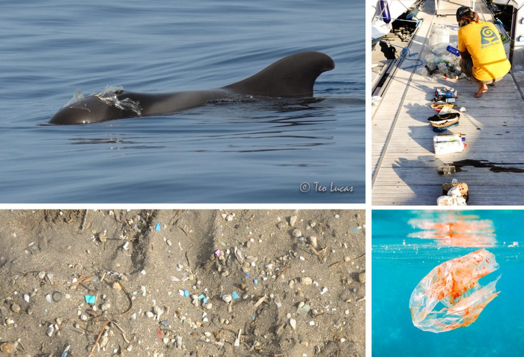 Recogida de plásticos de un solo uso del mar