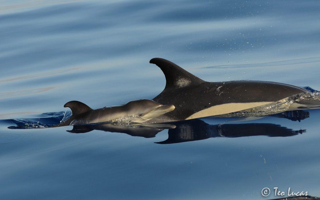 Avistar cetáceos en Tenerife: Los mejores encuentros del mes de agosto