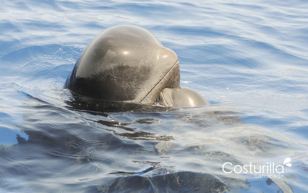 Ver ballenas en Septiembre, en Tenerife