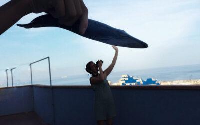 Delfines en Venecia y otras historias del 2020
